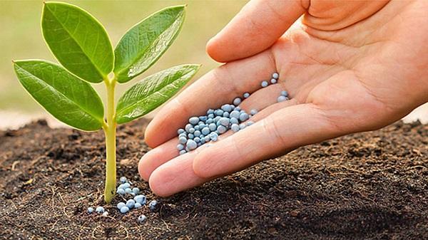 các loại phân bón hóa học và sản phẩm phân lân