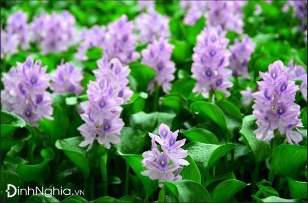 cảm nhận bài mùa xuân nho nhỏ và hình ảnh minh họa