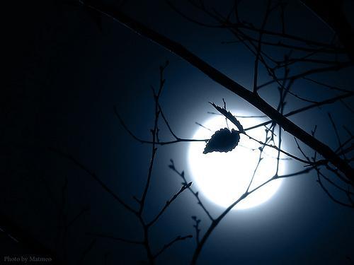Hình ảnh đêm buồn với trăng - cô đơn mình ta với trăng