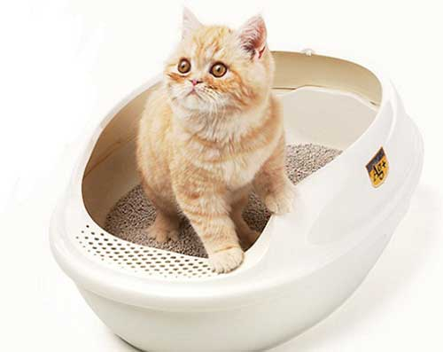 Kiên nhẫn hướng dẫn các bé mèo đi vệ sinh đúng cách