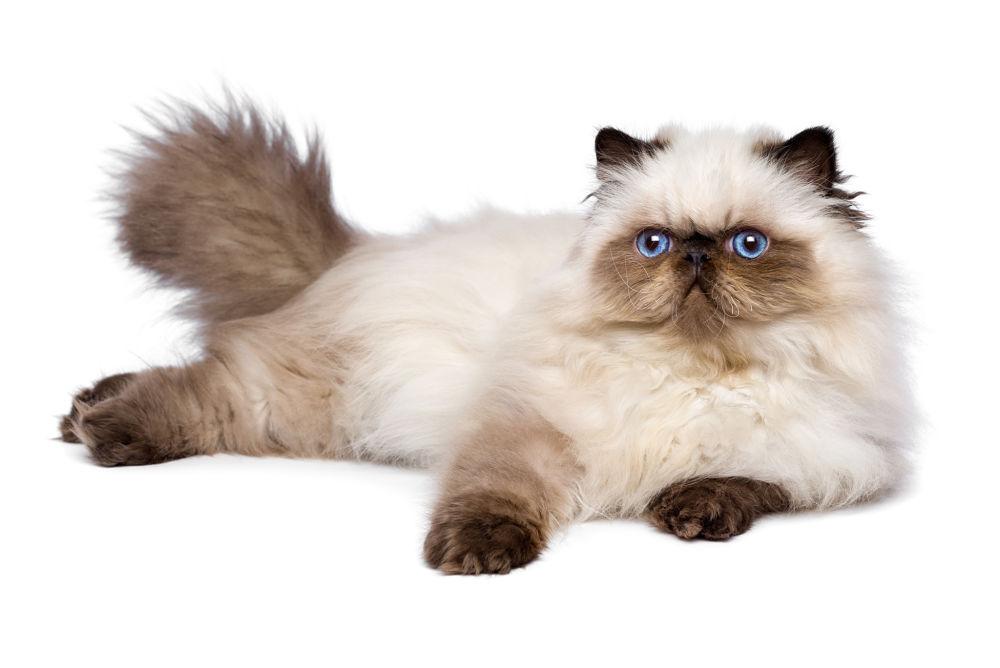 Nên tìm hiểu nhiều nguồn cung cấp mèo khác nhau để chọn mua mèo