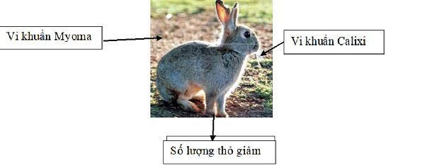 những biện pháp đấu tranh sinh học được sử dụng trên thỏ
