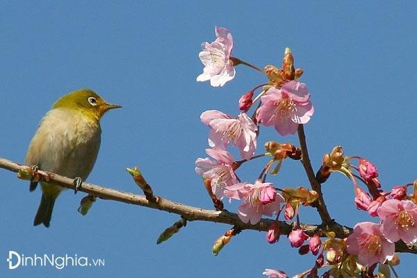 tìm hiểu và phân tích cảm nhận bài mùa xuân nho nhỏ